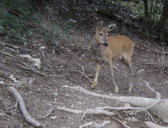Censimenti, piani di prelievo, recupero dei selvatici feriti e attività di controllo della fauna. Le decisioni di Regione Lombardia