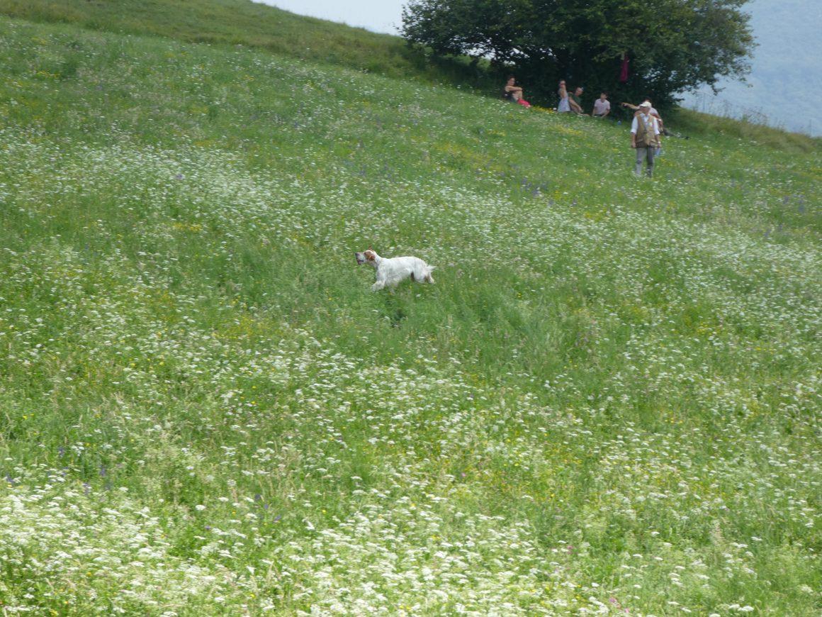 I documenti per addestramento cani e prova cinofila a Brescia