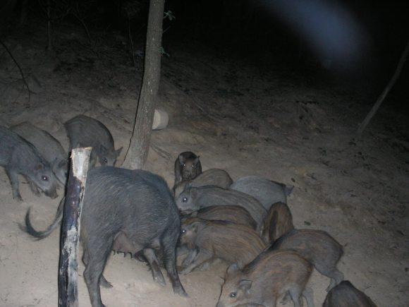 Cacciatori formati e abilitati nell'esecuzione dei piani di abbattimento delle specie più invasive a servizio delle Polizie Provinciali lombarde