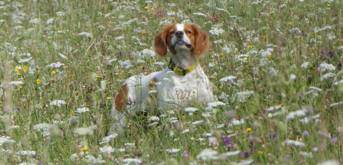 Addestramento cani in Lombardia: scarica l'autocertificazione con i riferimenti normativi