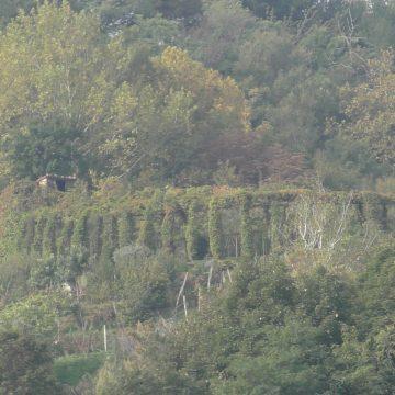 Il responso del Tar Lombardia: rimangono chiusi i roccoli, sospeso il calendario riduttivo