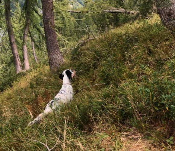 I cacciatori comaschi di Arosio e Brenna organizzano domenica 1 marzo una prova di caccia pratica su beccacce