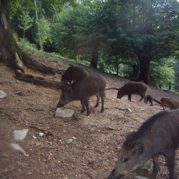 Gestione problematiche fauna selvatica: l'impegno dei cacciatori di Federcaccia Lecco