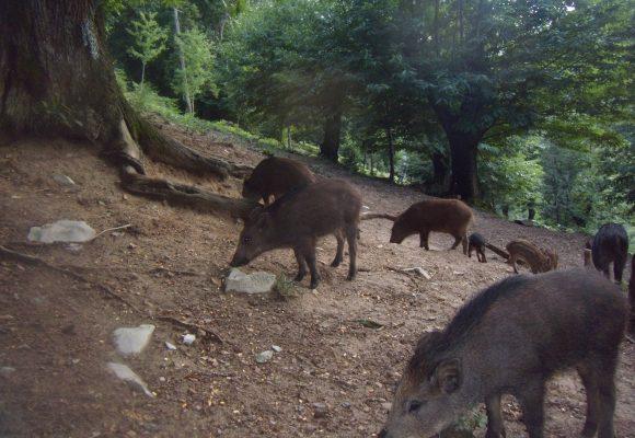 Protetto: Le lezioni del corso sulla caccia al cinghiale a Cremona