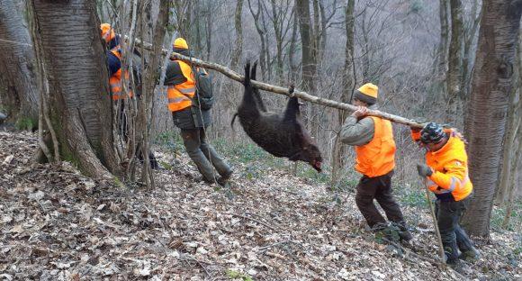 Approvate le modifiche alla legge regionale: Atc e Cac dovranno coordinare le forme di caccia al cinghiale in ottica di sicurezza