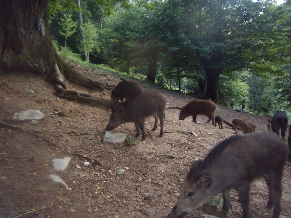 Controllo faunistico, caccia di selezione e addestramento cani possibile in Lombardia grazie all'ordinanza 649 fino al 5 marzo