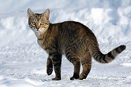 Caso di Lyssavirus in un gatto domestico: i cacciatori sentinelle della salute pubblica
