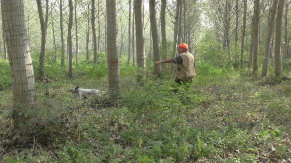 """Le associazioni venatorie lombarde rispondono alle sigle animaliste: definiti """"frange estremiste"""" i 55mila cacciatori lombardi chiedono rispetto"""