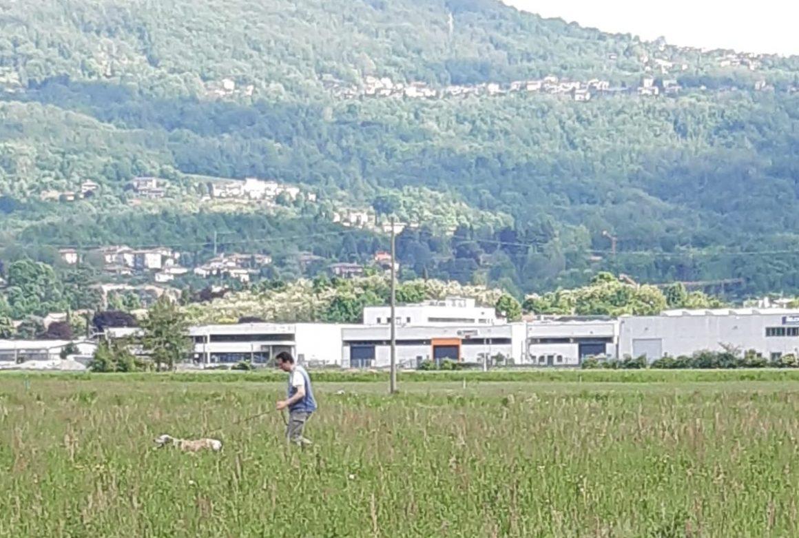 Gara su quaglie ad Oggiono sabato 29 e domenica 30 maggio a cura della Zac La Redaella in collaborazione con Fidc prov. Lecco